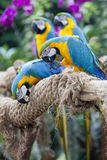 Οι παπαγάλοι στον κλάδο Στοκ Φωτογραφία