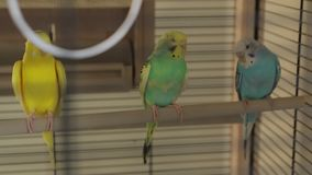 Οι παπαγάλοι τα υπόλοιπα απόθεμα βίντεο