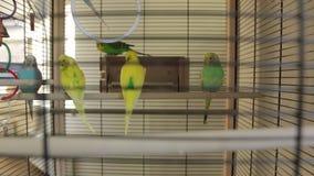 Οι παπαγάλοι το κλουβί απόθεμα βίντεο