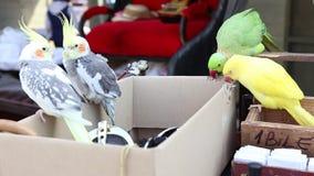 Οι παπαγάλοι κάθονται στο χαρτοκιβώτιο απόθεμα βίντεο