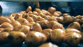Οι πατάτες κινούνται κατά μήκος της βιομηχανικής μηχανής φιλμ μικρού μήκους