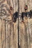 Οι παλαιές σάπιες ραγισμένες σανίδες με σκουριασμένο Phillips βιδώνουν ενσωματωμένος - λεπτομέρεια Στοκ Εικόνες