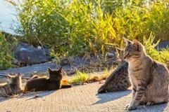 Οι περιπλανώμενες γάτες θερμαίνονται στον ήλιο Στοκ Φωτογραφία