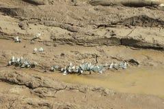 Οι πεταλούδες πίνουν το νερό Μικρή ομάδα πεταλούδων Στοκ φωτογραφίες με δικαίωμα ελεύθερης χρήσης