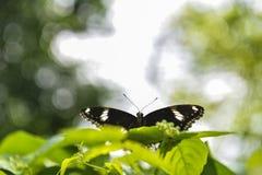 Οι πεταλούδες πετούν στον ουρανό Στοκ εικόνα με δικαίωμα ελεύθερης χρήσης