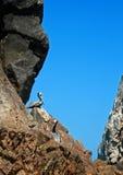 Οι πελεκάνοι εσκαρφάλωσαν στο λιμάνι Cabo SAN Lucas βράχου Los Arcos (τέλος εδάφους) σε Baja Μεξικό Στοκ φωτογραφία με δικαίωμα ελεύθερης χρήσης
