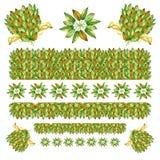 Οι πλαισιώνοντας σελίδες καρτών διακοσμήσεων πλαισίων ανθοδεσμών σύνθεσης του πράσινου φθινοπωρινού καλοκαιριού αφήνουν τα στοιχε διανυσματική απεικόνιση