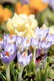 οι πλούσιοι λουλουδ&iot Στοκ φωτογραφία με δικαίωμα ελεύθερης χρήσης