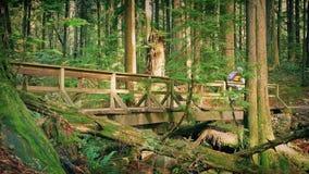 Οι ποδηλάτες οδηγούν πέρα από την ξύλινη γέφυρα στο δάσος φιλμ μικρού μήκους