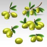 Οι πράσινες ελιές θέτουν 2 διανυσματική απεικόνιση