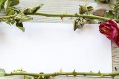 Οι πράσινοι μίσχοι με τις ακίδες είναι σε χαρτί Στοκ φωτογραφίες με δικαίωμα ελεύθερης χρήσης