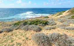 Οι πράσινοι Μπους και μπλε θάλασσα Στοκ Εικόνα