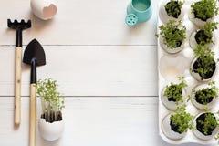 Οι πράσινοι νεαροί βλαστοί σε ένα κοχύλι αυγών με τις μικρές συσκευές κήπων σε ένα λευκό παρουσιάζουν τη τοπ άποψη Στοκ Φωτογραφίες
