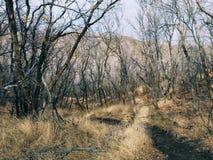 Οι πρόσφατες δασικές απόψεις πανοράματος πτώσης που, που, ίχνος πλατών αλόγου μέσω των δέντρων στο κίτρινο δίκρανο και αυξήθηκαν  στοκ εικόνες με δικαίωμα ελεύθερης χρήσης