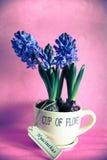 Φλυτζάνι των λουλουδιών Στοκ εικόνες με δικαίωμα ελεύθερης χρήσης