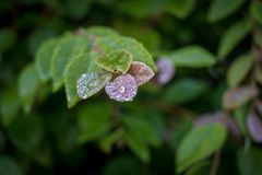 Οι πτώσεις δροσιάς στα φύλλα φυτών κήπων κλείνουν επάνω το υπόβαθρο Bokeh Στοκ εικόνες με δικαίωμα ελεύθερης χρήσης