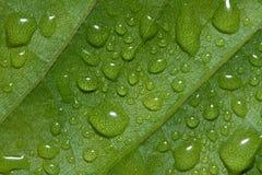 Οι πτώσεις νερού σε πράσινο βγάζουν φύλλα την περίληψη υποβάθρου Στοκ Φωτογραφία