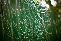 Οι πτώσεις της βροχής στο spiderweb Στοκ φωτογραφίες με δικαίωμα ελεύθερης χρήσης