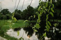Οι πτώσεις του νερού που αφορούν τα πράσινα φύλλα, κλείνουν επάνω των πτώσεων νερού στοκ εικόνες με δικαίωμα ελεύθερης χρήσης