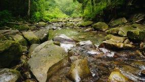 Οι ροές ποταμών ή ρευμάτων βουνών μέσω του δάσους το νερό βράζουν στις μεγάλες πέτρες Οικολογία και καθαρό περιβάλλον απόθεμα βίντεο