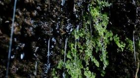 Οι ροές του νερού από τα φυτά και τις πτώσεις μειώνουν τα φύλλα σε αργή κίνηση φιλμ μικρού μήκους