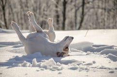 Οι ρόλοι σκυλιών σε την πίσω Στοκ φωτογραφία με δικαίωμα ελεύθερης χρήσης
