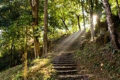 Οι σκάλες στο ίχνος φύσης Στοκ Εικόνες