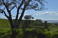 Οι σκιές των δέντρων στο Ώκλαντ ` s τοποθετούν Ίντεν στοκ φωτογραφίες