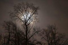 Οι σκιαγραφίες των δέντρων Στοκ φωτογραφία με δικαίωμα ελεύθερης χρήσης
