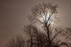 Οι σκιαγραφίες των δέντρων Στοκ Φωτογραφία