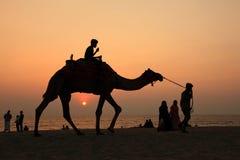 Οι σκιαγραφίες των ανθρώπων παίρνουν τους γύρους καμηλών στην παραλία Bekal στοκ εικόνα με δικαίωμα ελεύθερης χρήσης