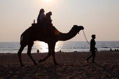 Οι σκιαγραφίες των ανθρώπων παίρνουν τους γύρους καμηλών στην παραλία Bekal στοκ φωτογραφίες