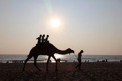 Οι σκιαγραφίες των ανθρώπων παίρνουν τους γύρους καμηλών στην παραλία Bekal στοκ εικόνες με δικαίωμα ελεύθερης χρήσης