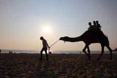 Οι σκιαγραφίες των ανθρώπων παίρνουν τους γύρους καμηλών στην παραλία Bekal στοκ εικόνες