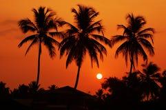 Οι σκιαγραφίες των φοινίκων στην αυγή στοκ εικόνα