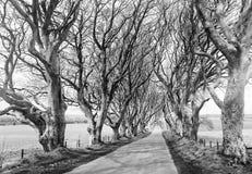 Οι σκοτεινοί φράκτες, δρόμος του βασιλιά στο παιχνίδι των θρόνων Στοκ φωτογραφία με δικαίωμα ελεύθερης χρήσης