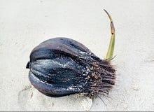 Οι σπόροι βλασταίνουν στην παραλία στοκ εικόνες