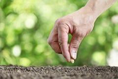 Οι σπόροι σποράς χεριών στο χώμα φυτικών κήπων, κλείνουν επάνω στο gree στοκ φωτογραφίες