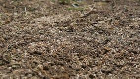 Οι σπόροι στο έδαφος, ολισθαίνων ρυθμιστής μετακινούνται το βίντεο μετακίνησης φιλμ μικρού μήκους