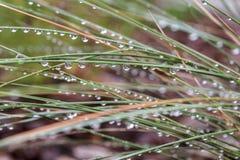 Οι σταγόνες βροχής αστράφτουν στη χλόη μετά από τη θύελλα