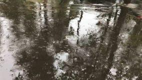 Οι σταγόνες βροχής αφορούν μια υγρή άσφαλτο, μια δυνατή βροχή και τις λακκούβες στην πόλη απόθεμα βίντεο