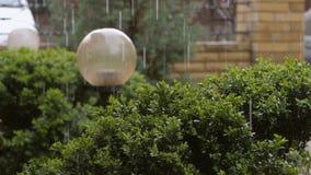 Οι σταγόνες βροχής χύνουν στον πράσινο θάμνο του πυξαριού φιλμ μικρού μήκους