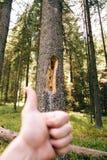 Οι συγκινήσεις ενός τουρίστα στα βουνά Ο φλοιός το δέντρο Στοκ Φωτογραφία