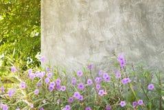 Οι συμπαγείς τοίχοι διακοσμούν με τα πορφυρά λουλούδια Στοκ Εικόνες
