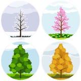 Οι τέσσερις εποχές ενός δέντρου Στοκ φωτογραφίες με δικαίωμα ελεύθερης χρήσης