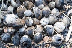 Οι τέφρες της καρύδας που ήταν στην πυρκαγιά στοκ εικόνες