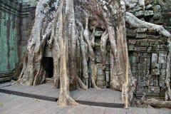 Οι τεράστιες ρίζες δέντρων καταπίνουν το ναό Στοκ φωτογραφία με δικαίωμα ελεύθερης χρήσης