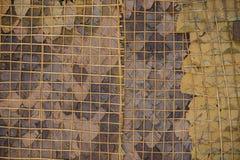 Οι τοίχοι ξεραίνουν τα φύλλα Στοκ Εικόνες