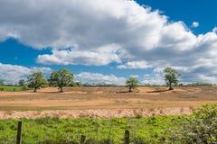 Οι τομείς καλλιέργειας στο νότιο Ayrshire με τέσσερα Magnificant ωριμάζουν τα δέντρα το χειμώνα Scotlands στοκ εικόνα