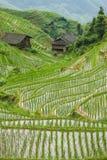 Οι τομείς ρυζιού μέσα η Κίνα στοκ φωτογραφίες με δικαίωμα ελεύθερης χρήσης